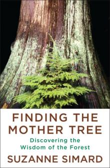 Suzanne Simard Mother Tree Point Reyes Books Emergence Magazine
